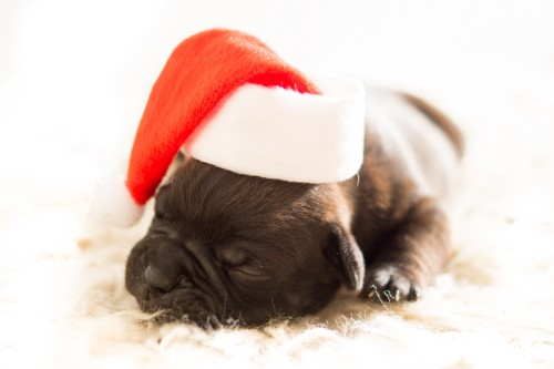 Cute-Puppy-Dog-with-Christmas-Hat.jpg
