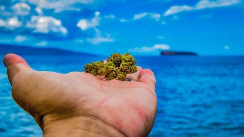 Guy-holding-Marijuana-bud-with-ocean-background.jpg