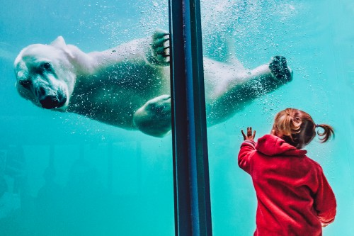 Girl-Standing-in-Front-of-Polar-Bear-in-Water-Tank.jpg