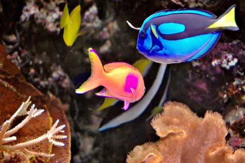 Tropical-Fish-1.jpg