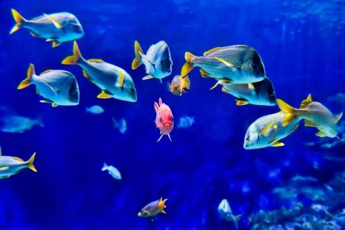 Tropical-Fish-2.jpg