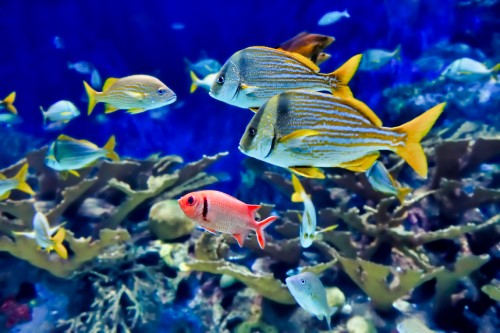 Tropical-Fish-3.jpg
