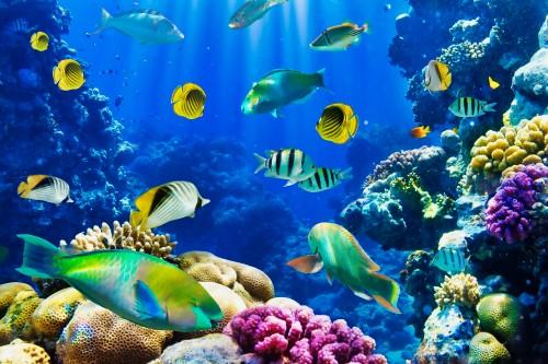 Tropical-Fish-5.jpg